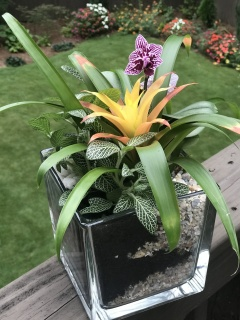 Bromeliad Orchid Combination