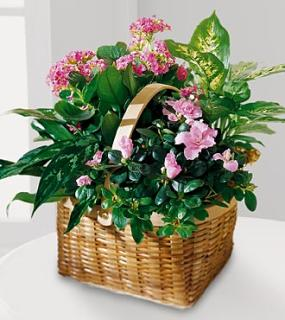 Pink Square Basket